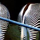 Two Zebras by Mary Kaderabek-Aleckson