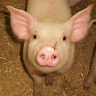 Nosey Piggy ...oink! by MichelleRees