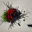 Rose by Kim Slater