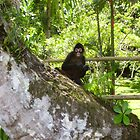 monkey in the tree  by johnjm33