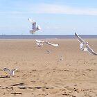 Beach Birds by olwen Fisher