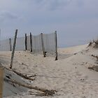 Dunes at Cape Henlopen State Park by Jenni C