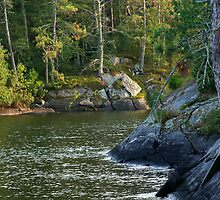 Rainy Lake Shoreline by Bill Morgenstern