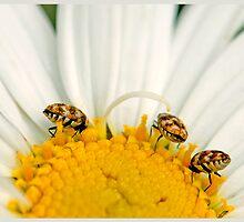 jitter-bugging by SharonLea
