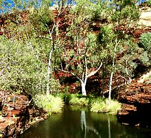Weano Creek and Ghost Gums by Larry149