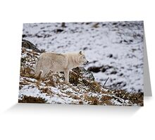 Arctic Wolf on Hill Greeting Card