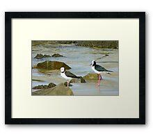 Powered Spring Stilts! - Pied Stilt - Kaka Point - NZ Framed Print