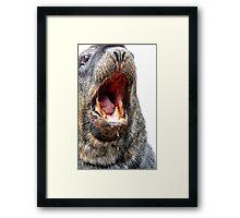 Slobber Chops - New Zealand Sea Lion  Framed Print