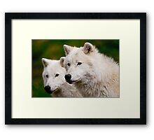 Arctic Wolf Pair Framed Print