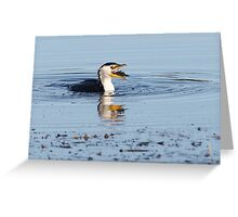 Little Pied Cormorant ~ Yum......Sushi  Greeting Card