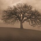 Oak Tree in Morning Fog by Paul  Huchton