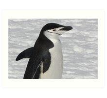 "Chinstrap Penguin ~ ""Ballroom Bound"" Art Print"