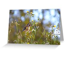 Dandelion Treats! - Goldfinch - Dunedin NZ Greeting Card