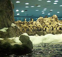 Penguin Family by LucyGaskin