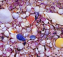 Shells by Travis Easton