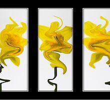Three Dafodils by patroc