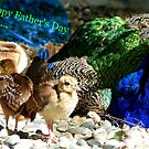Happy Fathers Day Dad.. - Peacock & Chicks - NZ by AndreaEL