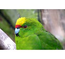 I Have A Snazzy Yellow & Red Cap! - Kakariki - NZ Photographic Print