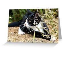 Aww!!..That One Got Away! - Spike Kitten - NZ Greeting Card