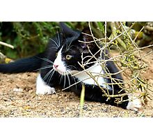 Aww!!..That One Got Away! - Spike Kitten - NZ Photographic Print