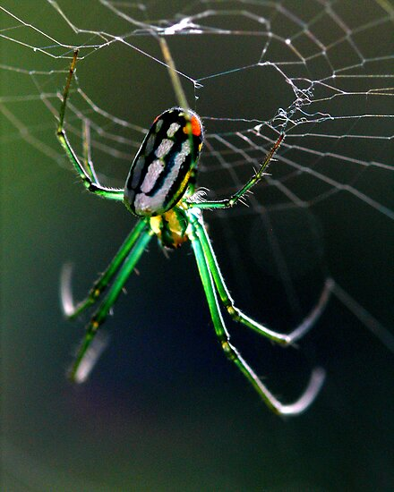 orchard orbweaver 3 by J.K. York