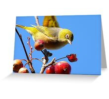 Berry, Berry Delicious - Silver-Eye - Gore Southland Greeting Card