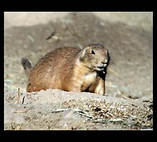 prairie dog 02 by Kittin