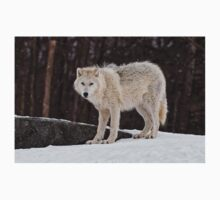 Arctic Wolf in Snow T-Shirt