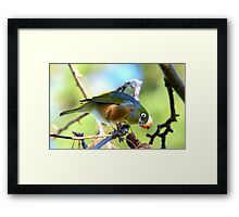 YUK!! This Berry Tastes Off!! - Silvereye - Gore NZ Framed Print
