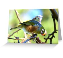YUK!! This Berry Tastes Off!! - Silvereye - Gore NZ Greeting Card