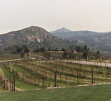 Vineyard by quixoticwriter