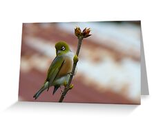 Hey, I'll Pose For A Painting! - Silver-Eye - NZ - Southland Greeting Card