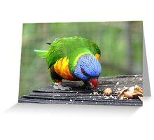 The Nutty Professor! - Rainbow Lorikeet - NZ Southland Greeting Card