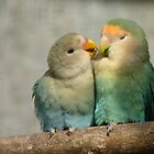 Oh!! Come On Give Me A Kiss..-Lovebirds - NZ Queenspark by AndreaEL