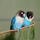 I Am Listening, Carry On....Blue Masked Lovebirds - NZ by AndreaEL