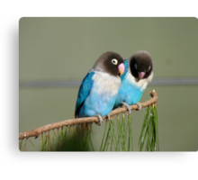 I Am Listening, Carry On....Blue Masked Lovebirds - NZ Canvas Print