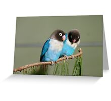 I Am Listening, Carry On....Blue Masked Lovebirds - NZ Greeting Card
