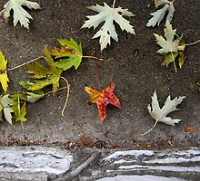 Stone and Leaves by rdshaw