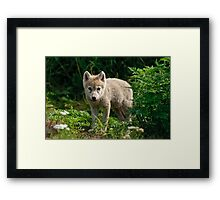 Arctic Wolf Pup - Update Framed Print
