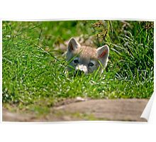 Who Me?? Arctic Wolf Pup Poster
