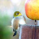 WOW! Is This The Big Apple! - Wax-Eye - NZ by AndreaEL