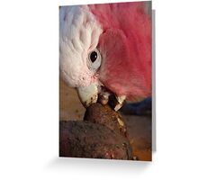 Hey!!! Who Needs A Spud Peeler - Galah - NZ Greeting Card