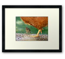 Pleeeese! Don't Step On Me!! - I'm Only Little! - Sparrow - NZ Framed Print