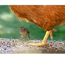 Pleeeese! Don't Step On Me!! - I'm Only Little! - Sparrow - NZ Photographic Print
