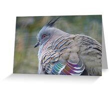 I Am a Dreamer - Crested Bronze-winged Pigeon - NZ Greeting Card