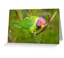 Did You Know I'm A Plum Head?!! - Plum-Headed Parakeet -NZ Dunedin Greeting Card