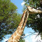 Giraffe by Cristel Gous-Veefkind