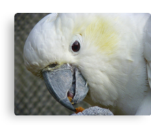 I Have Something Divine!!! - White Cockatoo - NZ Canvas Print