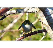 Do I look Like Happy Feet The Penguin? - Silver-Eye - NZ Photographic Print