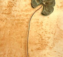 Four Leaf Clover  by Roz McQuillan
